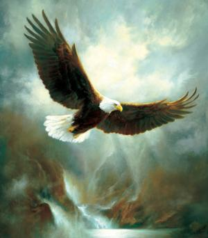 Eagle Flight 300