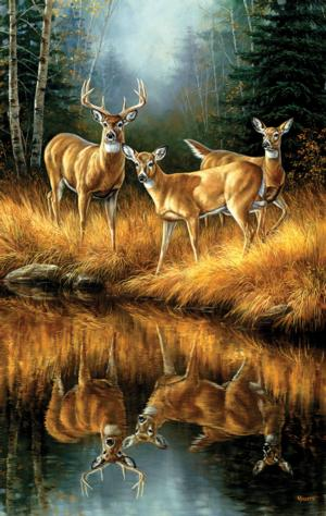Whitetail Reflections