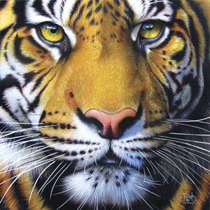Golden Tiger Face 1000