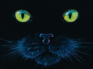 Black Cat 1000