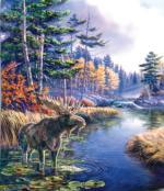 Legacy Moose