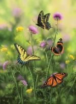 Butterflies & Thistle