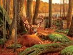 Where Sleeping Deer Lie