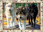 Wolf Pack Colors