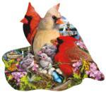 Spring Cardinals