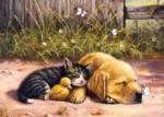Sleepy Companions